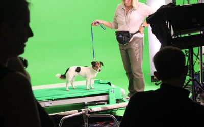Filming with Animals: Tips and Tricks