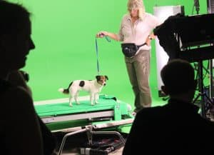 filming-with-animals