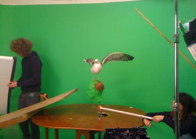 filming with animals on greenscreen