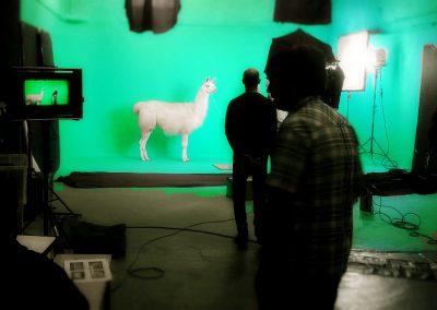 filming a llama in studio 1