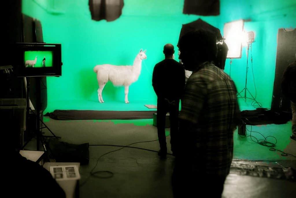 llama on greenscreen